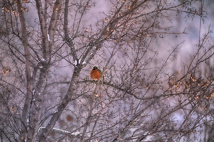 P3A9363c Winter 2018 - ID: 15671120 © Raymond E. Reiffenberger