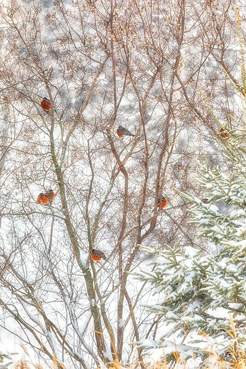 P3A9369c Winter 2018 - ID: 15671121 © Raymond E. Reiffenberger