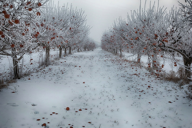 P3A5172c Winter 2019 - ID: 15671174 © Raymond E. Reiffenberger
