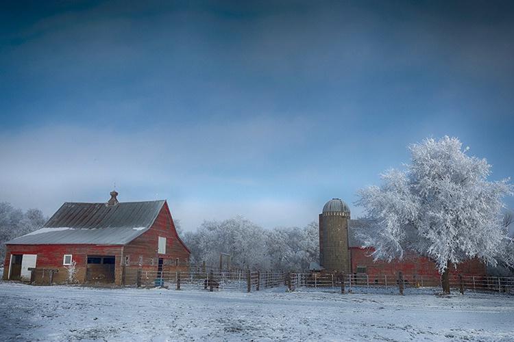 P3A5220c Winter 2019 - ID: 15671176 © Raymond E. Reiffenberger