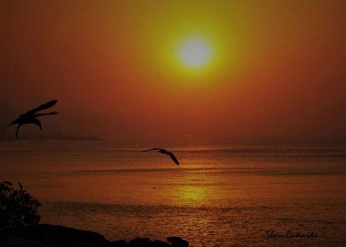 Sunset Cruz - ID: 15671356 © Sheri Camarda