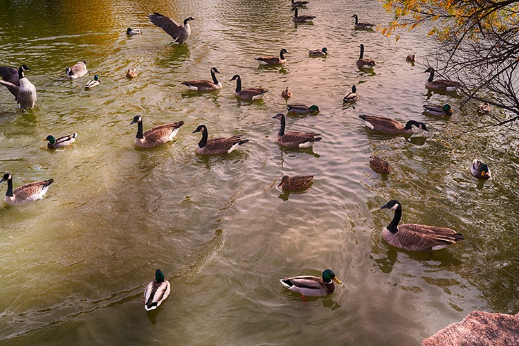 P3A7896c Fall 2017 - ID: 15671475 © Raymond E. Reiffenberger