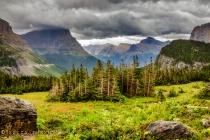 Whitebark Pine at Logan's Pass