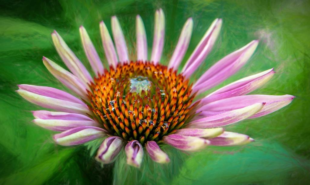 Flower - ID: 15673486 © Paula Xavier