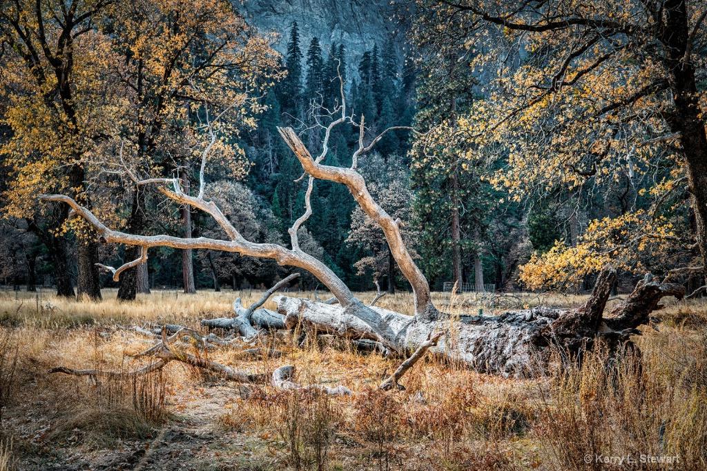 Downed Tree - ID: 15673568 © Kerry L. Stewart