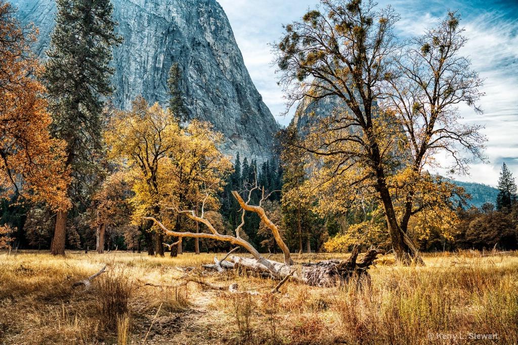 Meadow Trees - ID: 15673569 © Kerry L. Stewart