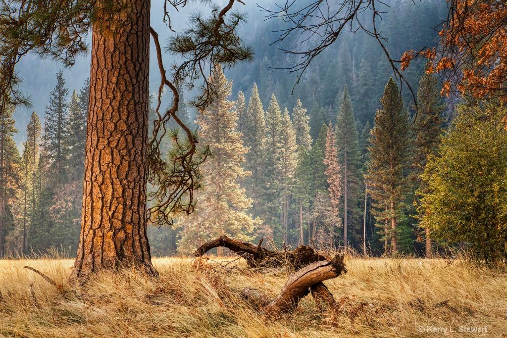Meadow Close-up - ID: 15673573 © Kerry L. Stewart