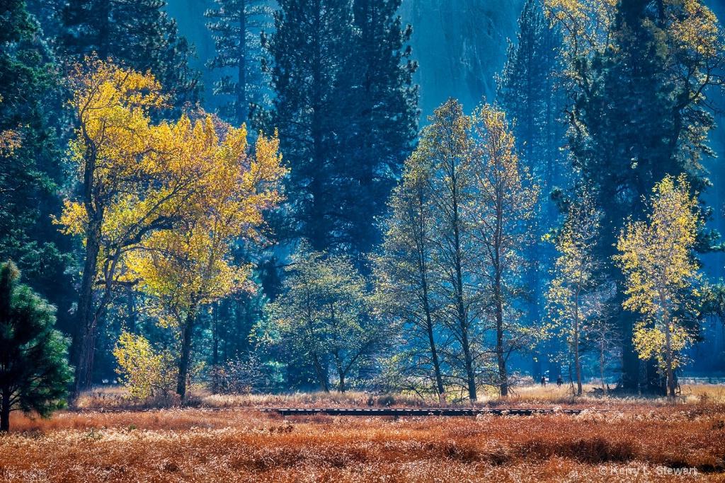 Cook's Meadow Boardwalk - ID: 15673583 © Kerry L. Stewart