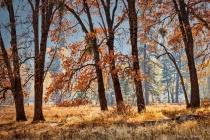 Smoky Cook's Meadow