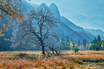 Smoky Meadow