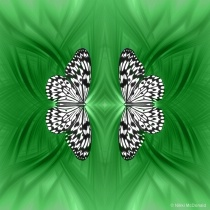 Rice Paper Butterfly Mirrored