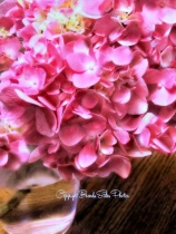 ~Pink Geraniums~