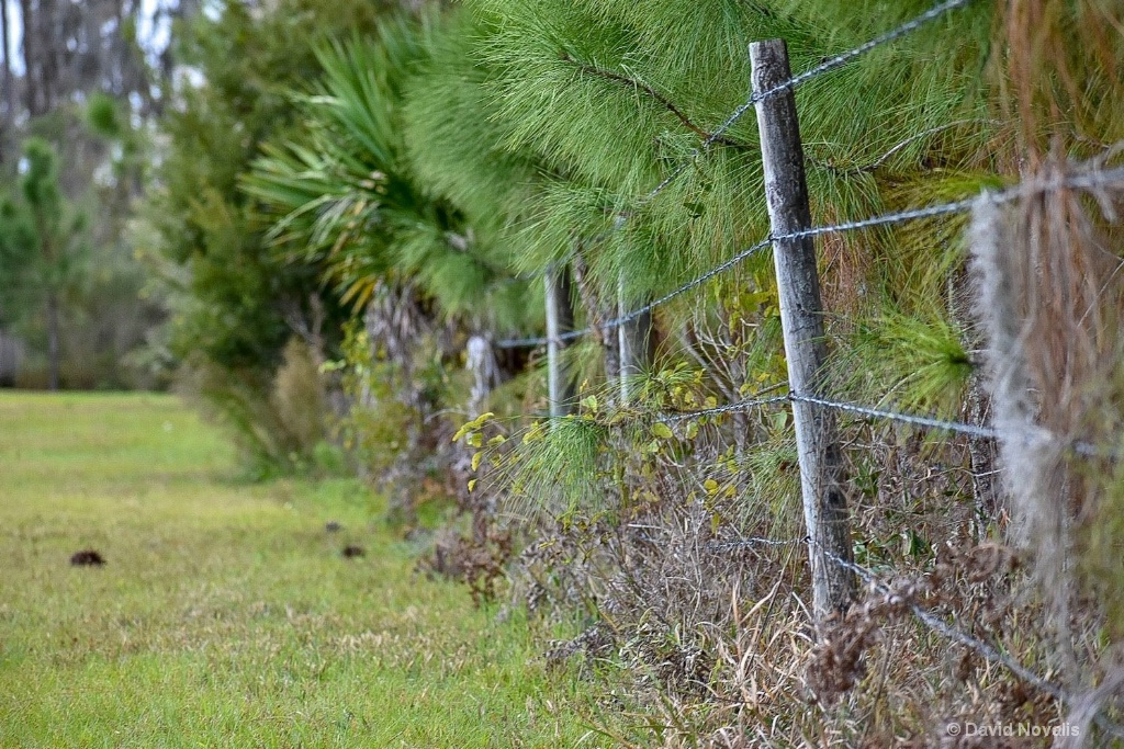 Nature Fenced In