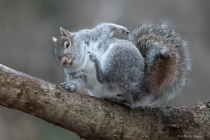 The Itchy Squirrel with Double Chin