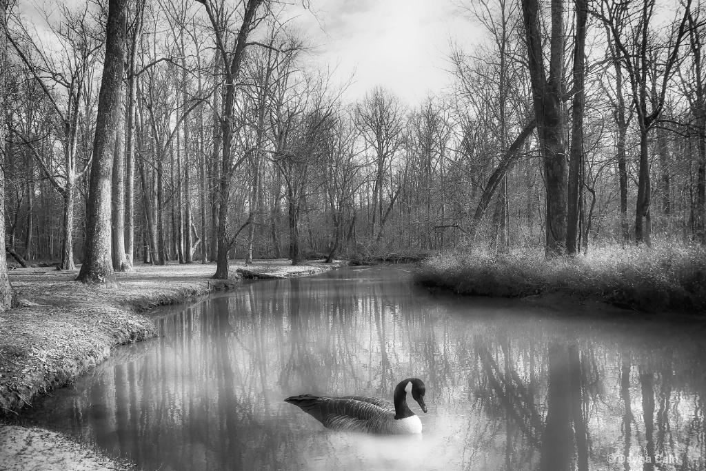Pond Dweller