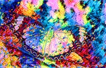 Crazy Colorful Butterfly