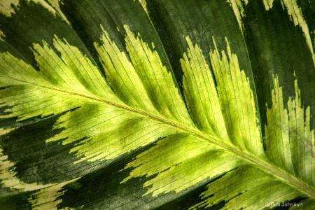 Green Leaf Patterns 3-0 F LR 1-27-19 J123
