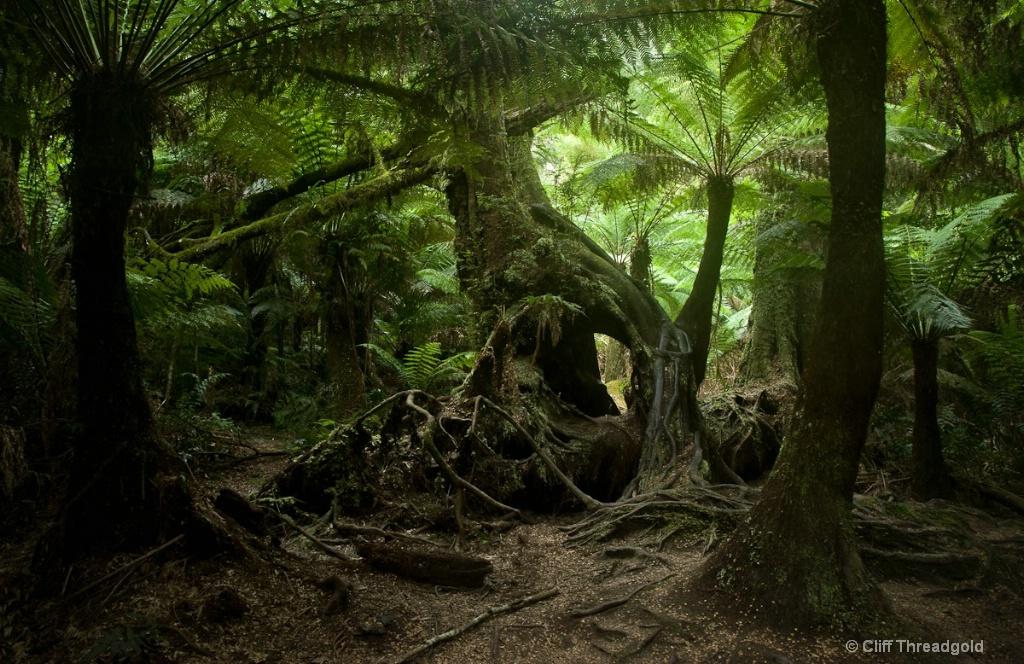 CT 1808 Otways Rain Forest 6.10.33 PM