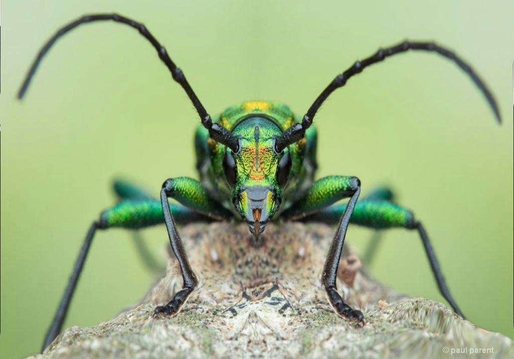 Green & Weird - ID: 15678788 © paul parent
