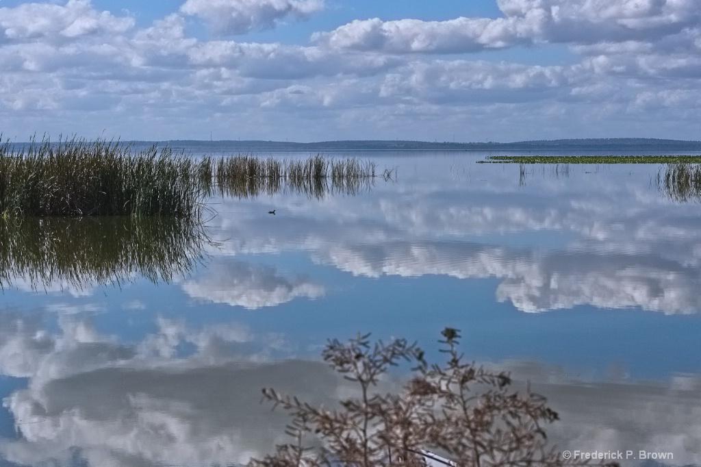 Lake Apopka Wildlife Area - ID: 15679371 © Frederick P. Brown