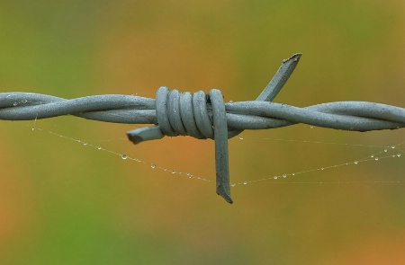 Barbed Wire and Dew