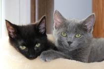 Apollo and Cleo