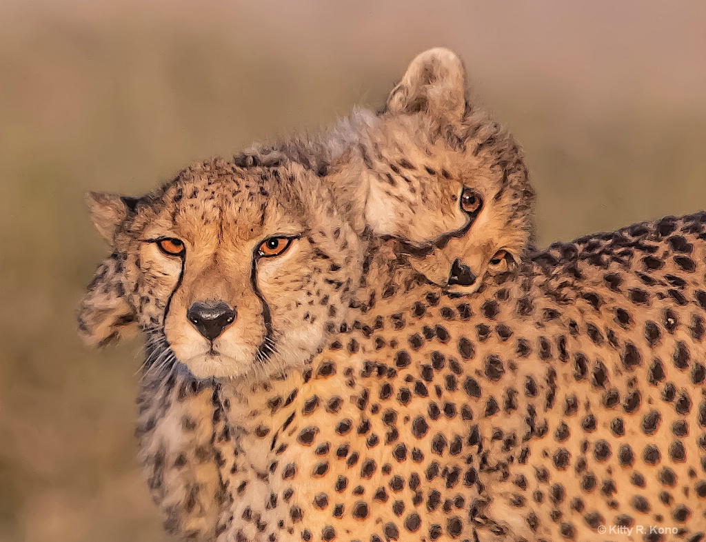 Mom and Babe Cheetah - ID: 15682412 © Kitty R. Kono