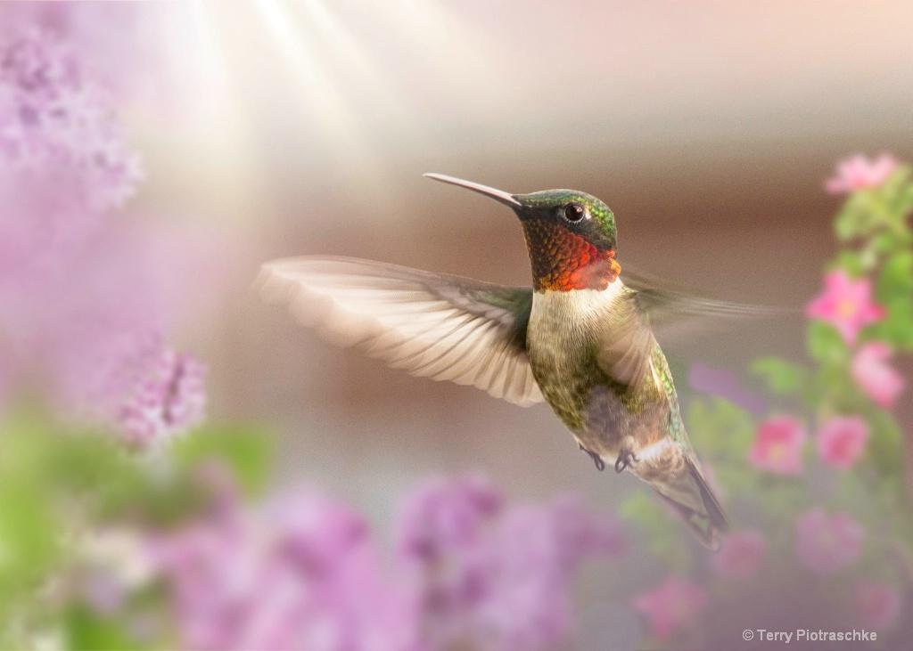 Flight Of A Hummingbird