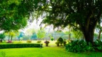Arboreous Zone