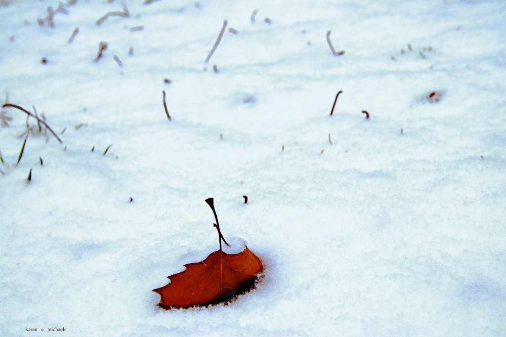 red leaf in snow - ID: 15686955 © Karen E. Michaels
