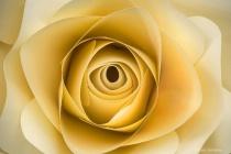 Imination Rose Macro 3-0 F LR 2-15-19 J122