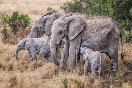 Elephant Family  5702
