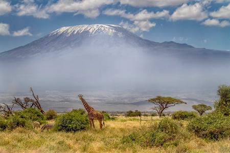 Kilimanjaro  5411