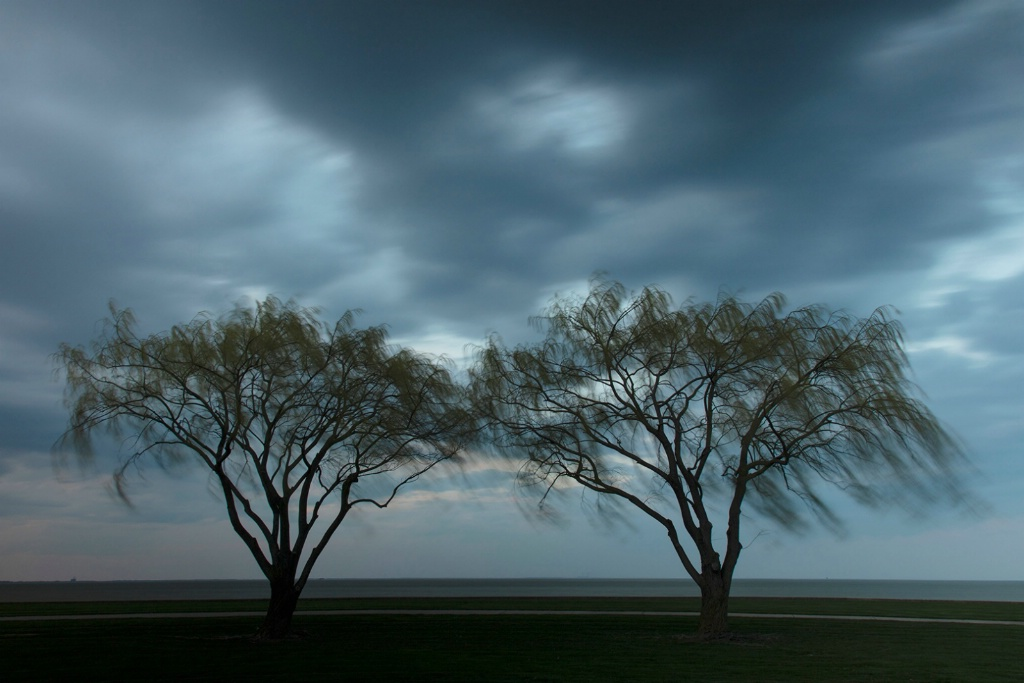 Willows in the Wind - ID: 15698245 © Dreaming Tree Galleries