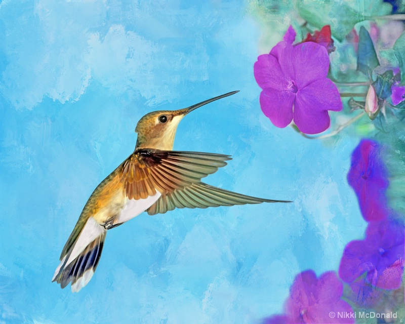 Ruby-throated Hummingbird with Impatiens
