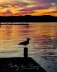 Sea Gull at Sunse...