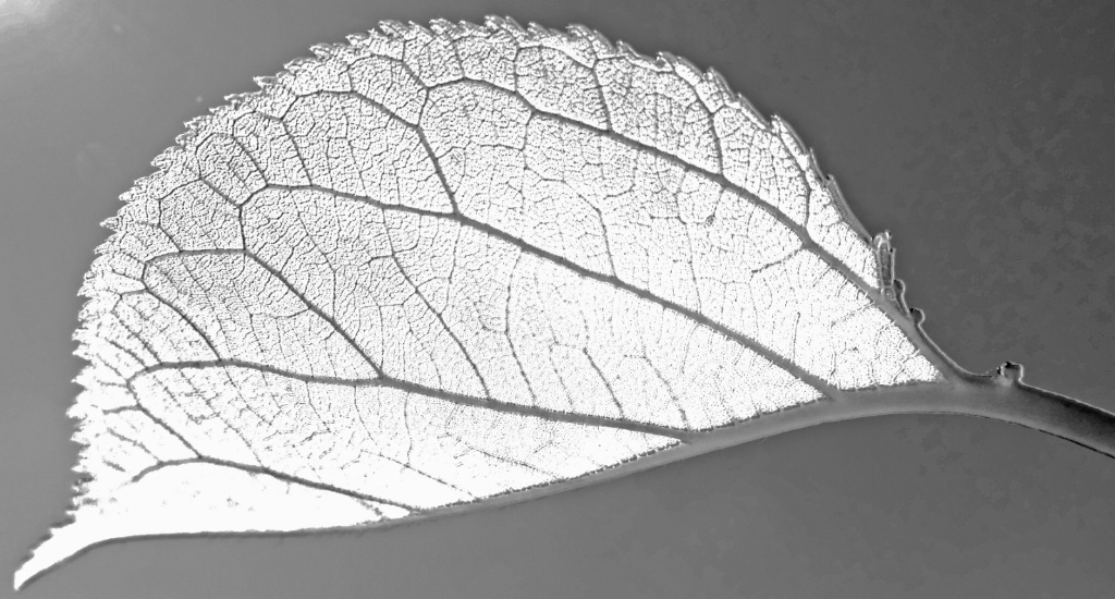 Leaf inner structure.