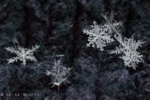 Tiny Snowflakes