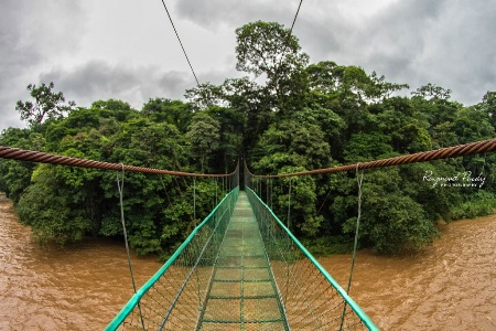 Suspended Bridge Over Sarapiquí River