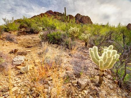 Beautiful Arizona