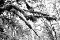 Mustache Trees, in B&W # 13