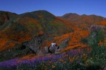 California Super Bloom