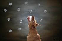 I Would Go To The Moon For Bubbles