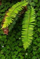 Shapes and Shades of Green