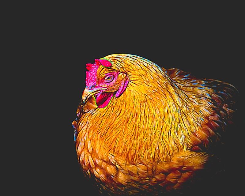 Chicken Bling