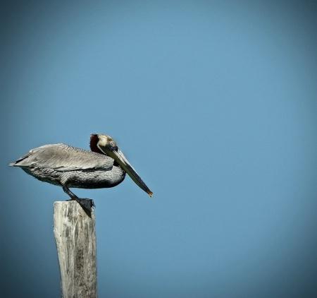 Pelican Pre-flight