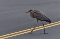 Bird Walking