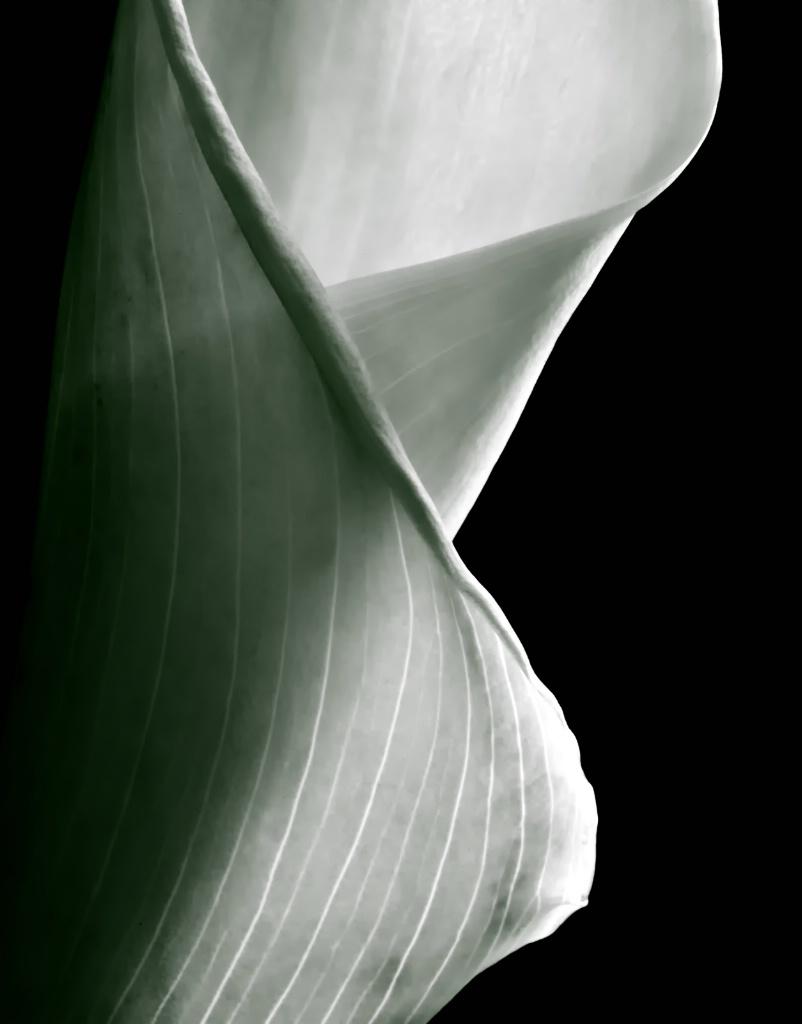 Light Wrap