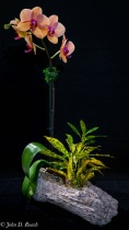 Joanns Orchid-4