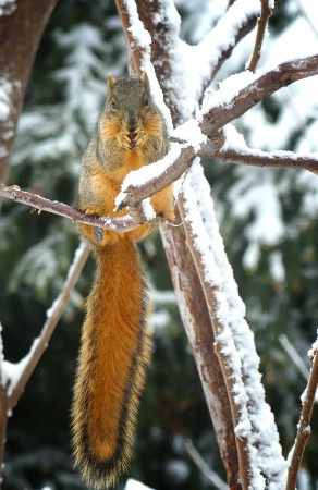The Long Tail of a Squirrel